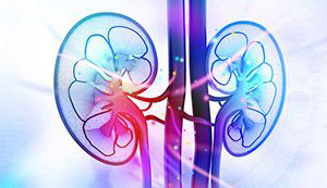 pastel-colored-kidneys